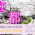 2021 京都桜 哲学の道 動画